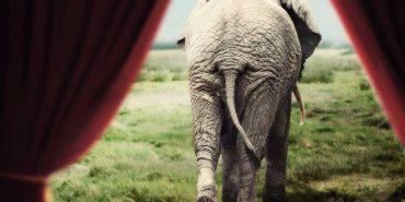 На Прикарпатті хочуть заборонити виступи пересувних цирків з тваринами