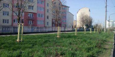 У Франківську висаджують дерева