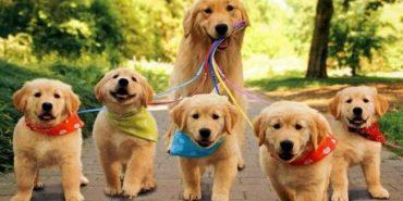 Прикарпатців кличуть на виставку собак