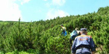 На Прикарпатті другий день шукають грибника, який заблукав у лісі