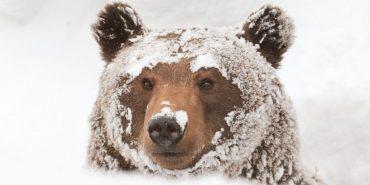 Для ведмедів з Галицького нацпарку спорудять вольєр завбільшки в чотири футбольних поля