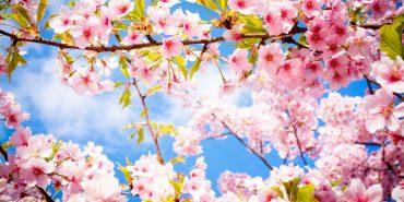 Синоптики розповіли, якою буде погода до кінця квітня
