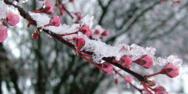 Сильні заморозки: на Прикарпатті знову оголосили штормове попередження