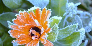 Мешканців Прикарпаття попереджають про заморозки