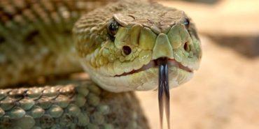 У парку на Прикарпатті хлопця вкусила змія