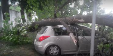 На Франківщині дерево впало на автомобіль, є постраждалі. ФОТО