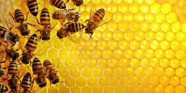 На Франківщині через хімікати на полях загинули сотні бджолиних сімей