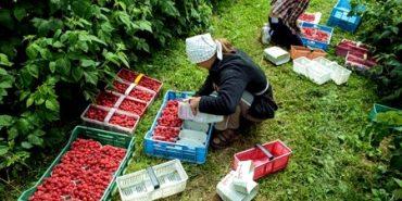 Польща вдосконалила умови праці для сезонних працівників