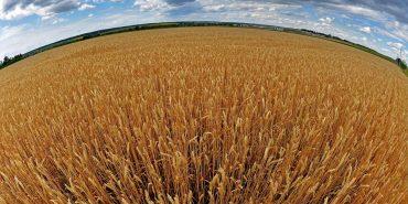 На Франківщині найбільш врожайні та прибуткові поля в Україні