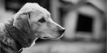 Прикарпатець відсидить п'ять років за ґратами за жорстоке вбивство собак
