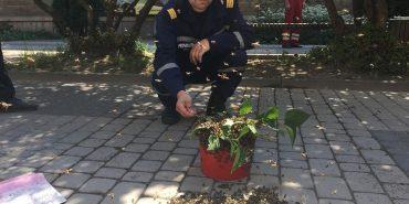 В середмісті Івано-Франківська рятувальники ловлять рій бджіл. ФОТО