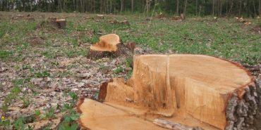 Прикарпатець зрубав дерев на 16 тис. грн