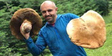 На Прикарпатті гриби-велетні. ФОТО