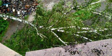 У подвір'ї в середмісті Коломиї впало дерево