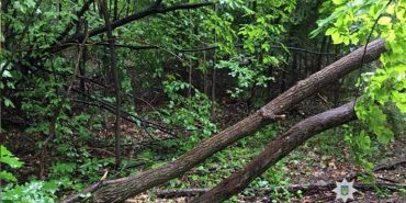 На Косівщині чоловік незаконно зрубав 9 дерев. ФОТО
