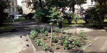 У центрі Львова на клумбі виросла картопля. Припускають, що її посадили безпритульні. ФОТО
