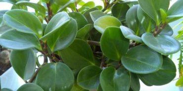 13 домашніх рослин, які приносять максимум користі і вимагають мінімум турбот. ФОТО