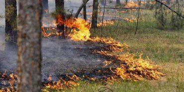 Рятувальники просять прикарпатців не провокувати пожежі у лісах