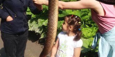 Туристи знайшли червонокнижну змію дорогою на Піп Іван. ФОТО