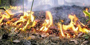 Рятувальники закликають коломиян не спалювати рослинність на городах. ВІДЕО