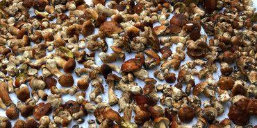 Прикарпатців застерігають: гриби можуть бути небезпечними