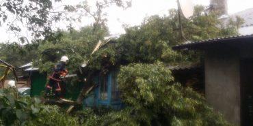 На Прикарпатті дерево впало на житловий будинок. ФОТО