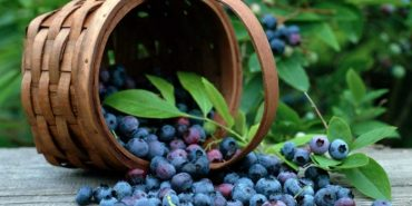Назвали найкориснішу ягоду, яку потрібно їсти щодня