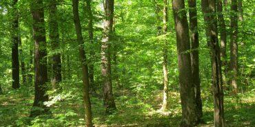 Пішов по гриби і не повернувся: 26-річного прикарпатця знайшли мертвим у лісі