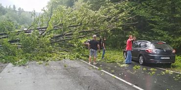 На Косівщині повалене дерево зупинило рух транспорту. ФОТО