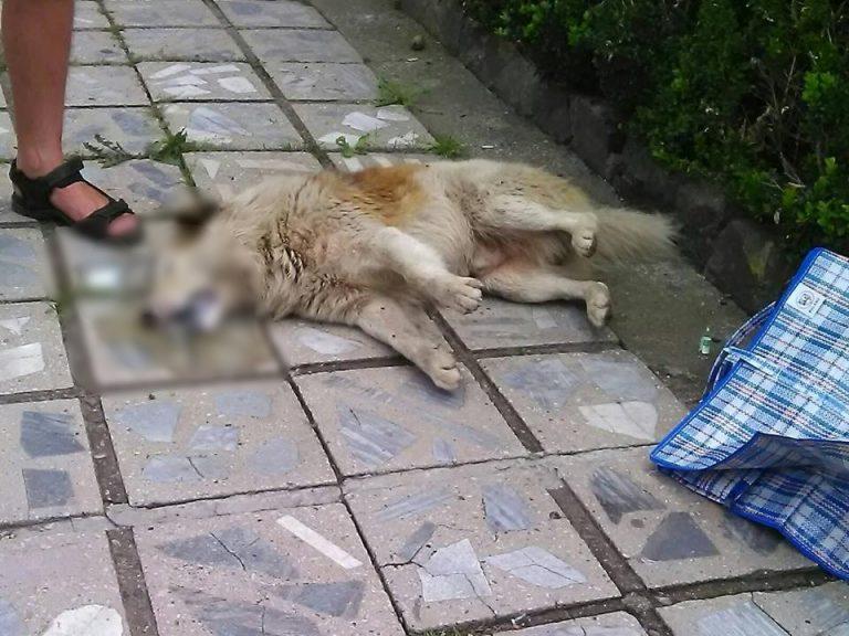 У Коломиї собака, яку отруїли, померла у муках
