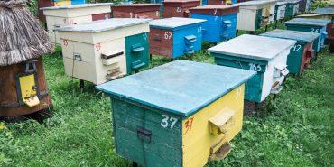 На Прикарпатті бджолярі зобов'язані реєструвати пасіки