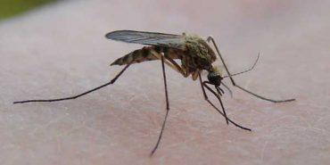 Комарі почали передавати рідкісну хворобу: як не заразитися