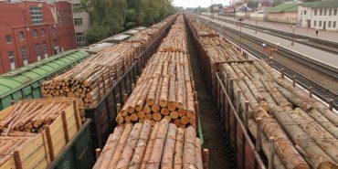 В Україні боротимуться з незаконною вирубкою лісу