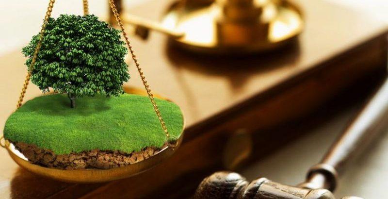 Коломийська прокуратура вимагає повернути незаконно привласнені землі вартістю понад 10 млн. грн.