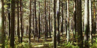 На Прикарпатті 80 людей шукали двох дітей, які заблукали в лісі