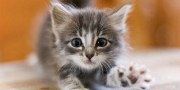 На Прикарпатті надзвичайники врятували кошеня