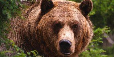 У мережі оприлюднили відео, як ведмідь з Галицького нацпарку грає у футбол