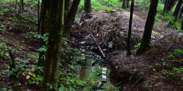 """В Карпатах вирубали ліси, """"забувши"""" згадати про це в документах. ФОТО"""