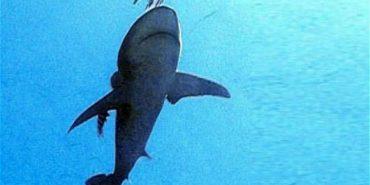 На єгипетському курорті акула вбила туриста