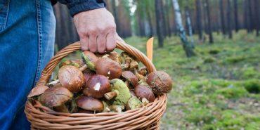 Найвідоміший грибник України живе на Франківщині. ВІДЕО