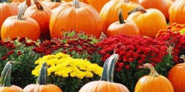 Гарбуз достигає восени. Саме в цю пору, він обдаровує людей багатьма вітамінами