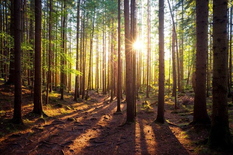 Вересень у Карпатах: яскраві світлини фотографа з Коломиї