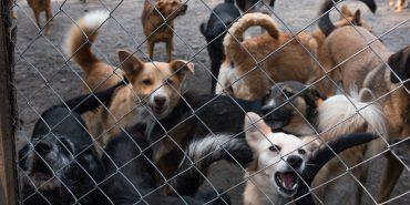 Хто і за скільки у Коломиї побудує новий притулок для тварин. ФОТО