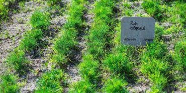 У Білоберізькій ОТГ вирощуватимуть кедрові горішки