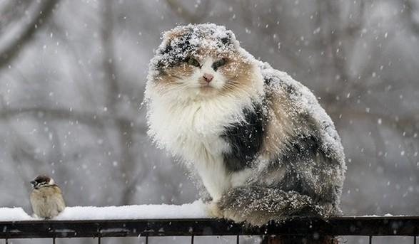 У Карпатах очікується мокрий сніг