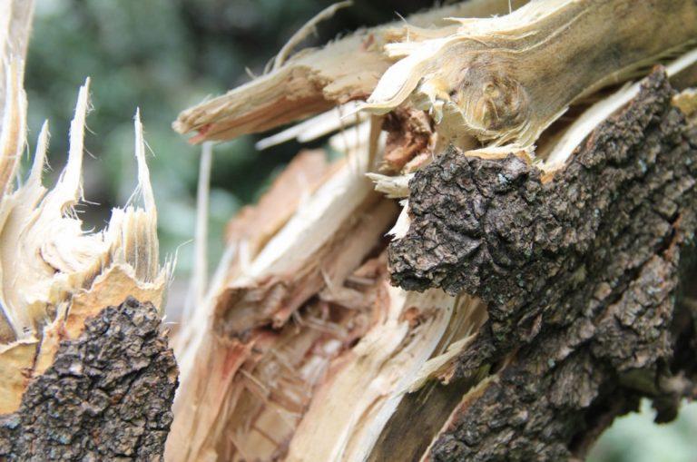 На Західній Україні зламана вітром гілка вбила чоловіка