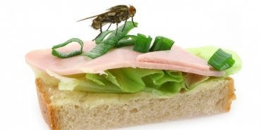 Що робити, якщо на їжу сіла муха: поради Уляни Супрун