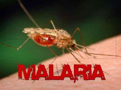 Малярія на Тернопільщині, - захворіла вагітна жінка. ВІДЕО