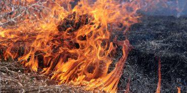 Коломиянин потрапив з численними опіками до лікарні – спалював суху траву