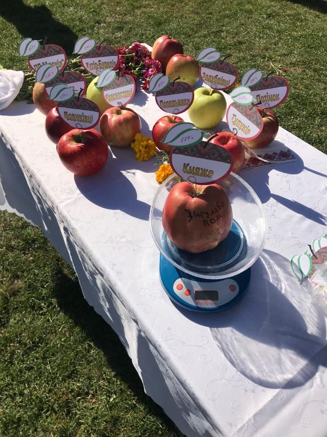Яблуко-велетень: на фестивалі у Снятині зафіксували місцевий рекорд. ФОТО